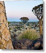 Quiver Tree Aloe Dichotoma, Quiver Tree Metal Print