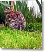 Rabbit As A Painting Metal Print