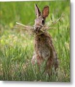 Rabbit Collector Square Metal Print