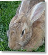Rabbit Head On Metal Print