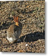 Rabbit. Metal Print