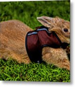 Rabbit With Vest Metal Print