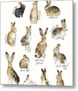 Rabbits And Hares Metal Print