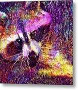 Raccoon Animal Cute Mammal  Metal Print