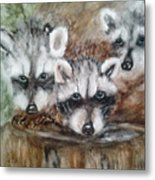 Raccoon Babies By Christine Lites Metal Print