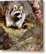 Raccoon Found Treasure  Metal Print