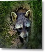 Raccoon In A Log Metal Print
