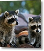 Racoons On The Roof Metal Print