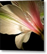 Radiance Of Hope Metal Print