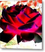 Radiant Red Rose Metal Print