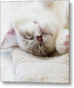 Ragdoll Kitten Asleep Metal Print
