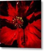 Raging Red Hibiscus Metal Print