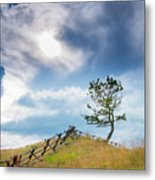 Rail Fence And A Tree Metal Print
