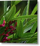 Rain Coated Blades Of Grass And  Deep Pink Petals Metal Print