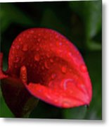 Rain Coated Red Anthurium Metal Print