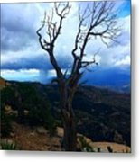 Rain Column Tree Metal Print