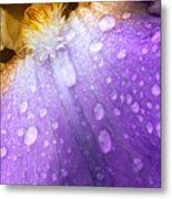 Rain Covered Iris Metal Print