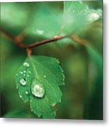 Rain Droplet On Leaf Metal Print