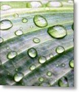 Rain Drops On A Leaf Metal Print