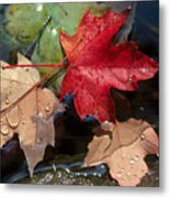 Rain Drops On Leaves Metal Print