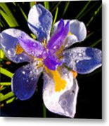 Rain Flower Morning Metal Print