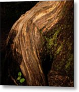 Rain Forest Light Metal Print