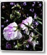 Rain Kissed Petals. This Flower Art Metal Print