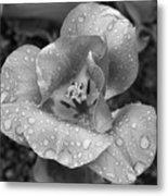 Rain Kissed Rhine Flower Metal Print