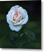 Rain Rose Metal Print