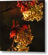 Rain Soaked Leaves-2 Metal Print