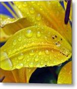 Rain Spotted Yellow Lily I 2009 Metal Print