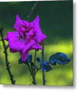 Rain Wet Rose 2 Metal Print