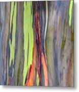 Rainbow Eucalyptus 13 Metal Print