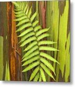 Rainbow Eucalyptus And Fern Metal Print
