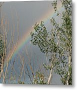 Rainbow In The Trees Metal Print