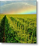 Rainbow Over The Cornfields Metal Print