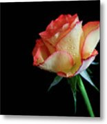 Raindrop Rose Metal Print by Tracy Hall