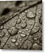 Raindrops #1 Metal Print
