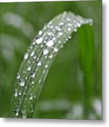 Raindrops On A Blade Of Grass Metal Print