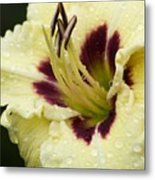 Raindrops On A Petal Metal Print