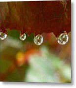 Raindrops On A Red Leaf Metal Print