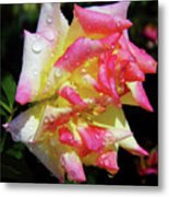 Raindrops On A Rose Metal Print
