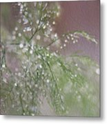 Raindrops On Fern Metal Print