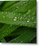 Raindrops On Green Leaves Metal Print