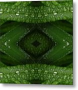 Raindrops On Green Leaves Collage Metal Print