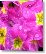 Raindrops On Pink Flowers 2 Metal Print by Carol Groenen