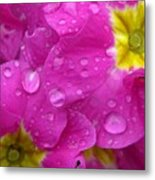 Raindrops On Pink Flowers Metal Print