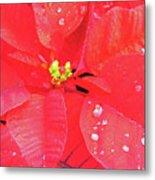 Raindrops On Red Metal Print