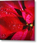Raindrops On Red Poinsettia Metal Print