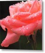 Raindrops On Roses... Metal Print